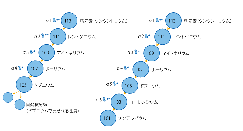 ▲ウンウントリウムを観測した際の,原子が崩壊していく様子。(左)1回目・2回目の観測では4回のα崩壊とドブニウムの自発核分裂を観測した。(右)3回目の観測では6回のα崩壊を観測し,メンデレビウムになったことを確認した。 理化学研究所プレスリリースを参考に作成